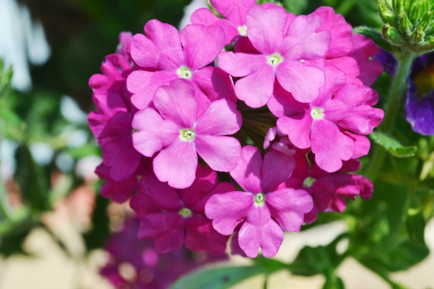 04.29.13 Purple flowers