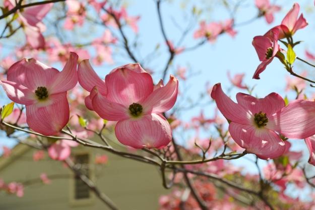 04.29.13 Three Flowers