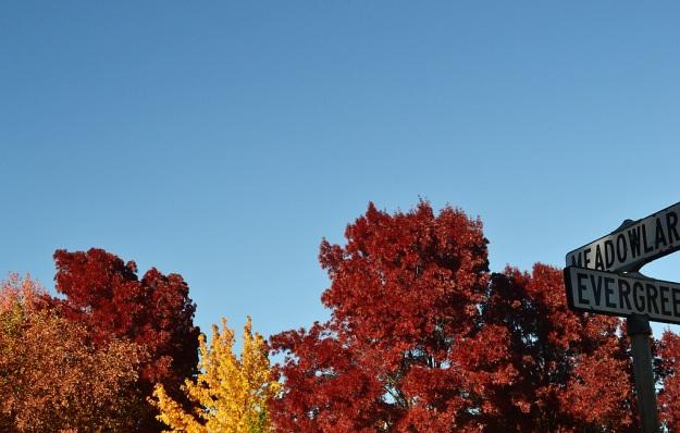 10.23.13 Fall 4