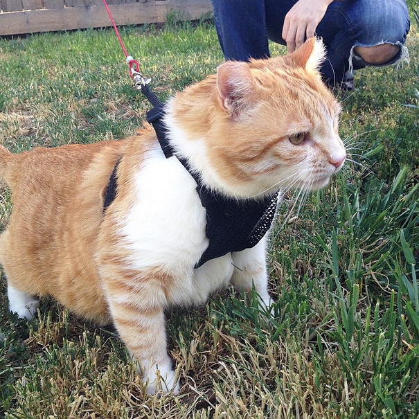 Whiskers Harness